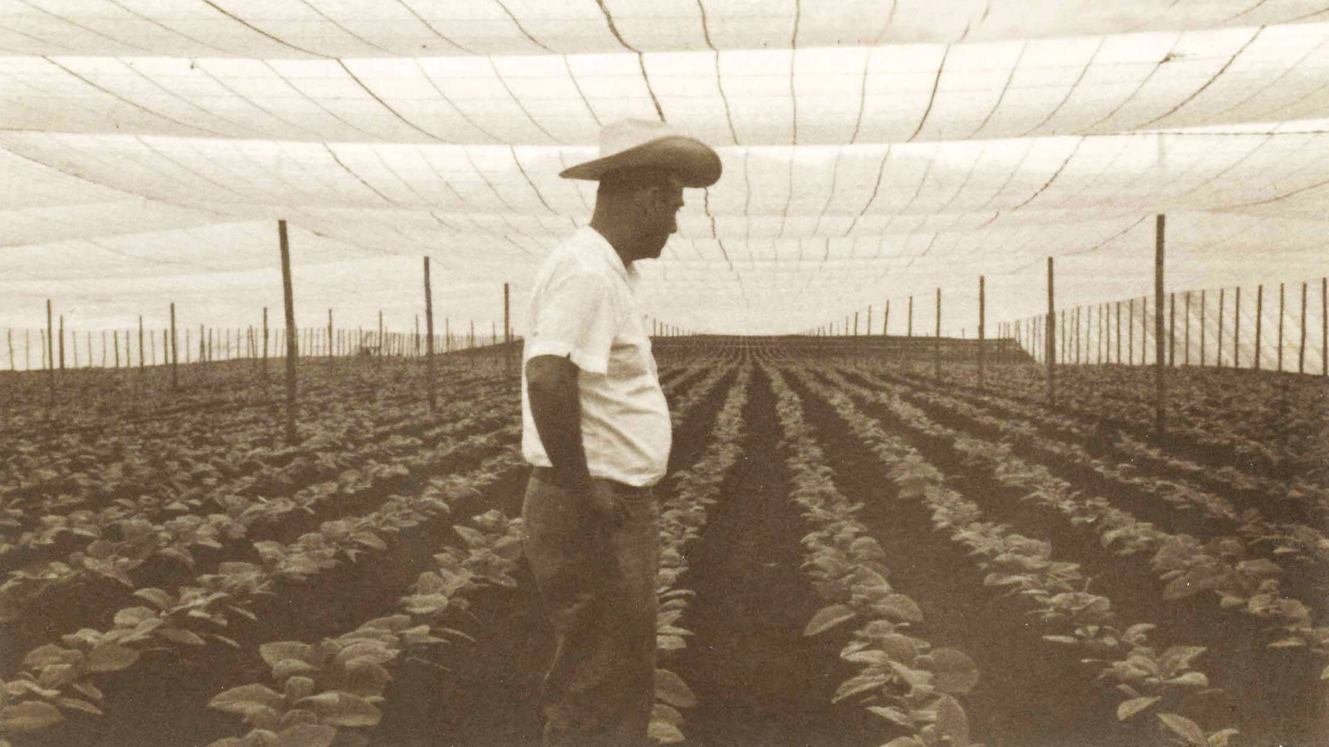 Plasencia Cigars - 1965 photo